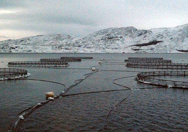 Русский лосось на чужом берегу