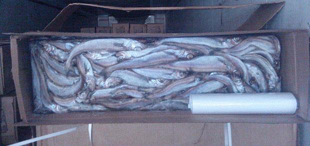 «Робинзон» подложил рыбообработчикам свинью
