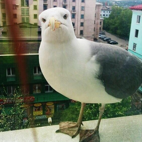 Удара темечковой зоны верхней головы тела клювом чайки ...